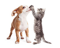 Funny Puppy and Kitten Playing. Funny photo of playful puppy with kitten batting at his nose Royalty Free Stock Photography