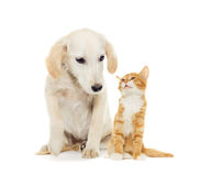 Funny puppy and kitten Stock Photography