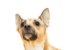 Funny puppy the muzzle Stock Photo