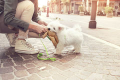 Funny puppy plays with his owner in urban place. Puppy plays with his owner in urban place Stock Photos