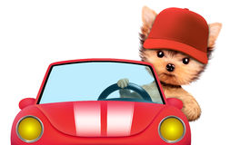 Funny puppy sitting in a cabriolet in baseball cap. Funny puppy sitting in the cabriolet in baseball cap, isolated on white background. Vacation and travel Royalty Free Stock Photo