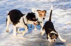 Free Funny Puppy Slips And Sliding On Ice Stock Photography - 79305332