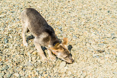 Funny puppy on a walk on the beach stock photography
