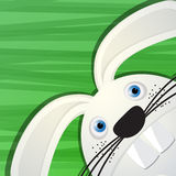 Funny rabbit avatar icon Royalty Free Stock Photo