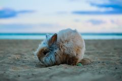 Funny Rabbit in the beach pets stock image