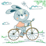 Funny rabbit on bicycle Royalty Free Stock Photography