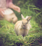 Funny rabbit. Cottontail bunny rabbit running in the garden Royalty Free Stock Photography