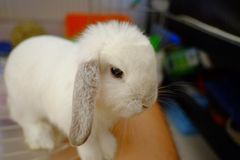 Funny rabbit Stock Photo