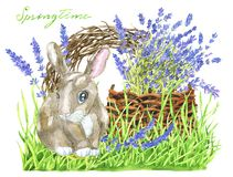 Funny rabbit in grass, basket with lavender flowers and bird nest stock image