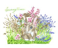 Funny rabbit in grass, blooming trees flowers, lavender bouquet royalty free stock photos