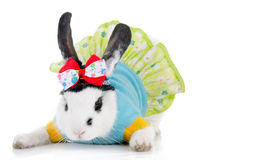 Funny rabbit with green dress and bow Royalty Free Stock Photo