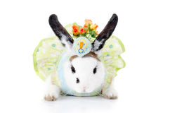 Funny rabbit with green dress and hat Stock Photo