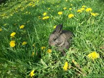 Funny rabbit in green grass 2 royalty free stock photo