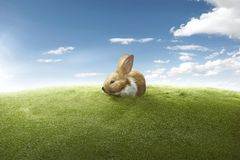 Funny rabbit on the green lawn Stock Photo