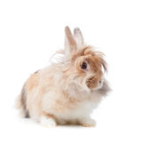 Funny rabbit Stock Image