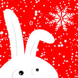 Funny rabbit on red christmas snowing background Royalty Free Stock Photography