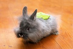 Funny rabbit with salad on the back Royalty Free Stock Images