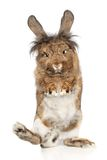 Funny rabbit standing on its hind legs Stock Images