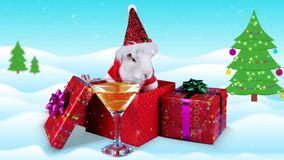 Funny rabbit toasting cheers with champagne glass near gift boxes stock footage