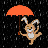 A funny rabbit with umbrella in the rain. Vector-art illustration Stock Photo