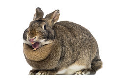 Funny Rabbit (4 years old) Royalty Free Stock Photography