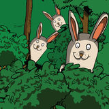 Funny rabbits in the forest Stock Photo