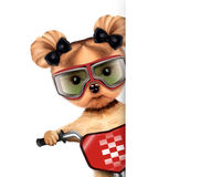 Funny racer dog with bicycle. Sport concept Royalty Free Stock Photography