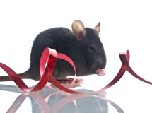 Funny rat Stock Photo