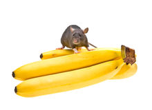 Funny rat and banana on white Royalty Free Stock Image