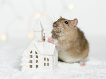 Funny rat leaning on Christmas scandinavian house candle. Funny face rat standing at Christmas decorations holding chimney of scandinavian house candle holder stock photo