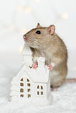 Funny rat leaning on Christmas scandinavian house candle. Funny rat standing at Christmas decorations leaning on scandinavian house candle holder among snow on stock images