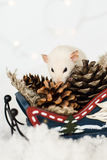 Funny rat looking for gifts in sledge at christmas decorations. Funny rat looking for gifts in Christmas decorations of rustic wooden sled full of cones among Royalty Free Stock Photography