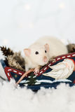 Funny rat sitting in wooden sledge at christmas decorations. Funny rat sitting in Christmas decorations of rustic wooden sledge full of cones among snow Stock Image