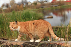 Funny red cat cat in a fecnce Stock Images