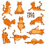 Funny red cat doing yoga position Royalty Free Stock Image