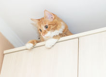 Funny red cat sitting Stock Images