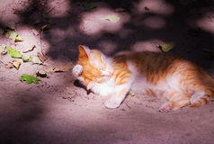Funny red cat is sleeping. Funny red cat is sleeping in the shade Royalty Free Stock Images