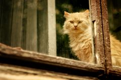 Funny red fur cat sitting on window and looking at city street Royalty Free Stock Photography