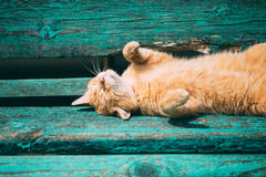 Funny Red Kitten Cat Sleeping On Bench In Park, Hot Summer Day. Stock Image