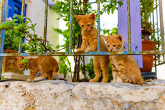 Funny red kittens Stock Photos