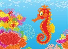 Seahorse and corals Stock Images