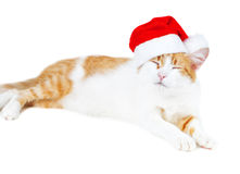 Funny red and white cat in santa's hat isolated Stock Photos
