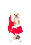Funny redhead dog. In Christmas costumes on white background Stock Photos