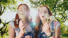 Funny redheaded twin girls teenagers play with dandelion flowers, blow off seeds. 180 fps slow motion video. Two red twin sisters are playing with dandelion stock video
