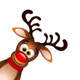 Funny Reindeer on white background Stock Photos