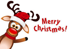 Funny Reindeer on white background Stock Photo