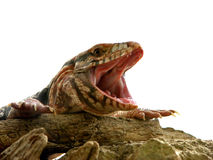 Funny reptile stock photography