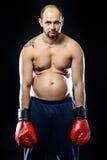 Funny resigned fat boxer. Isolated on black background Royalty Free Stock Image