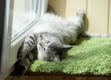 Funny resting cat in the balcony on sunny hot summer day, sleepy cat, young kitten in the terrace, half sleepy cat with open eyes. Funny resting cat in the Stock Images