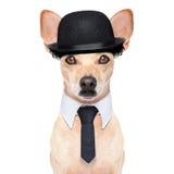 Funny retro dog stock image